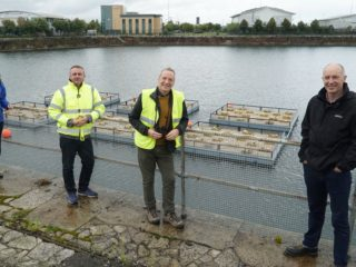 Peel L&P has worked with a range of partners to install nesting rafts at Wirral Waters